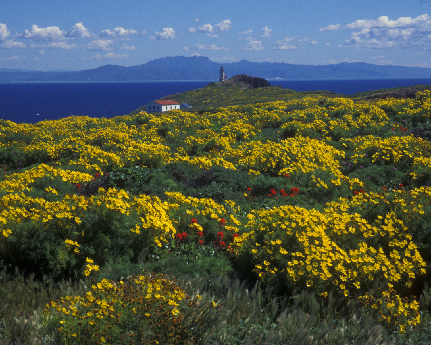 Anacapa Island in Channel Islands National Park Picture by Derek Lohuis National Park Service