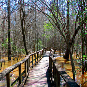 Boardwalk in Congaree National Park Picture by Theresa Thom of NPS