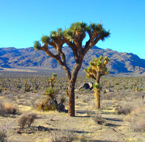 Joshua Tree National Park Picture by USGS.gov