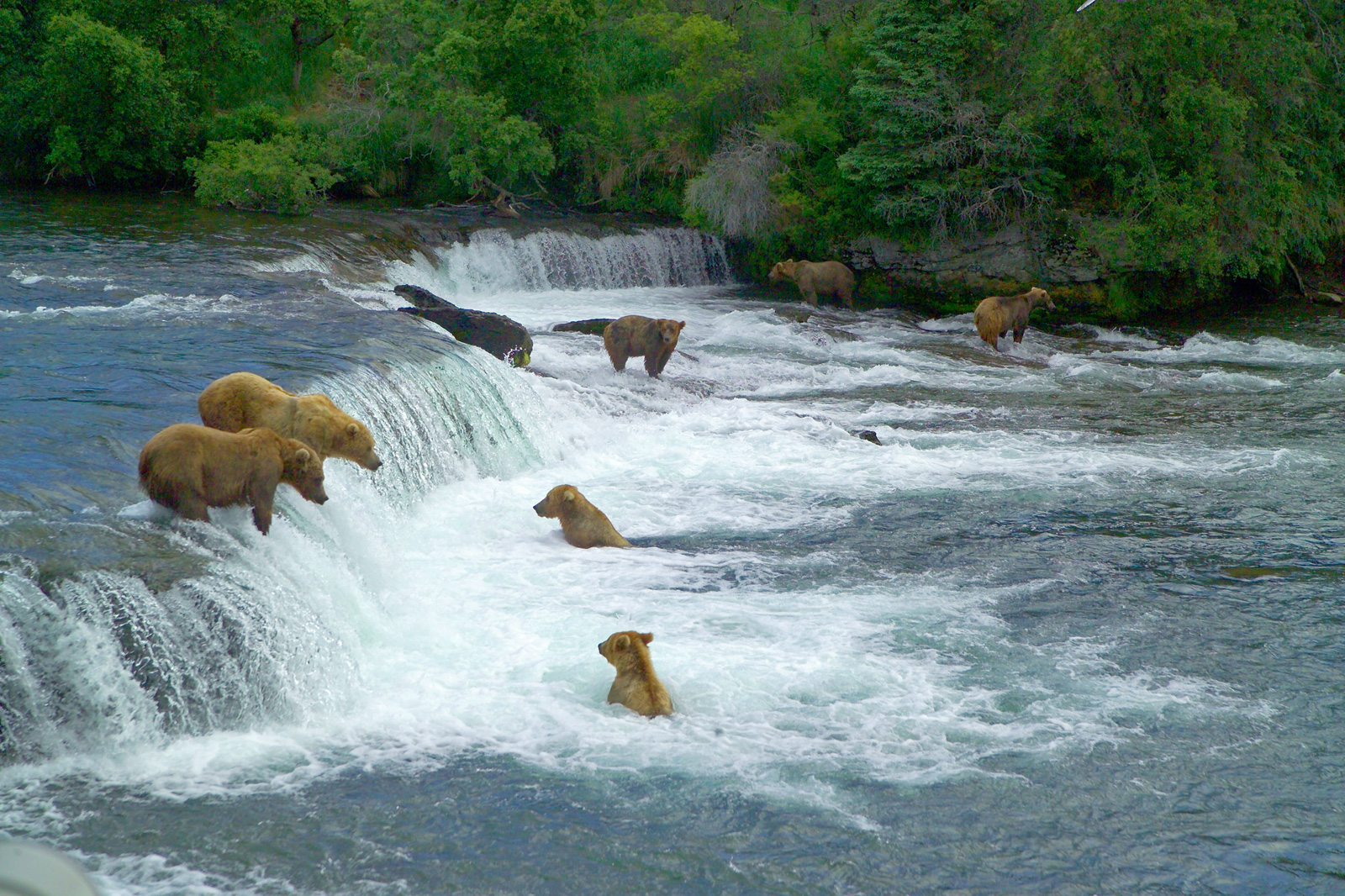 Alaska katmai national park