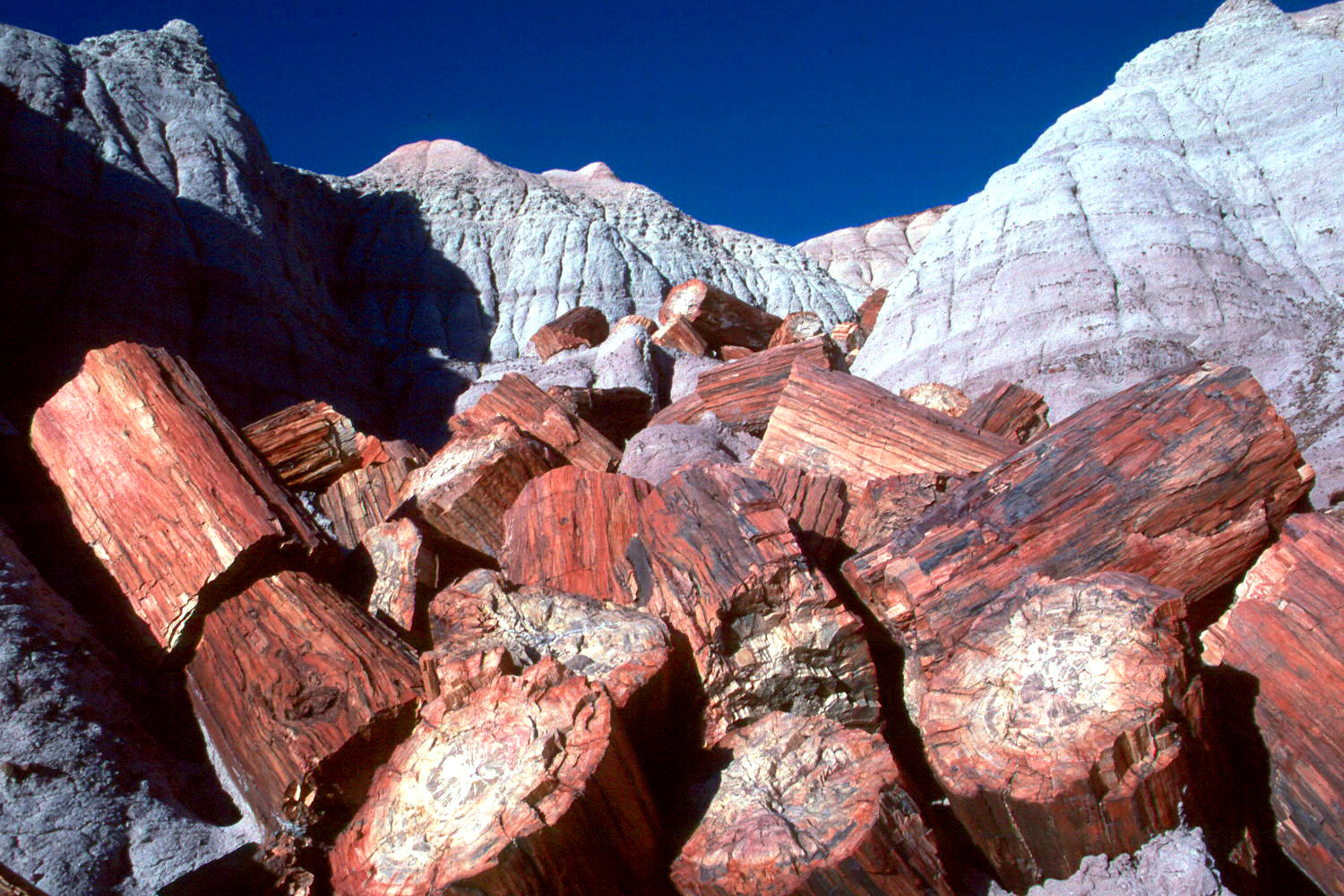 Petrified forest national park sciox Choice Image