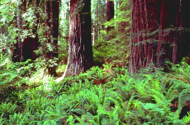 Redwood national park sciox Choice Image